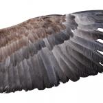 Simbolismo de… las alas