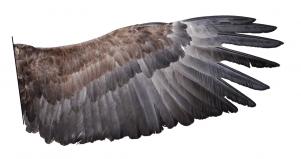 Nueva Acrópolis - Simbolismo de las alas