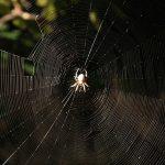 Simbolismo de… la araña