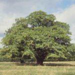 Simbolismo de… el árbol