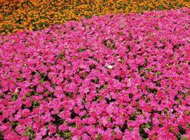 Nueva Acrópolis - Vivir la primavera