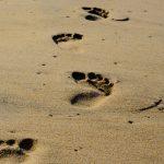 Dar sentido a nuestros pasos
