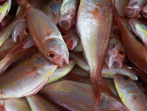 fish-istanbul