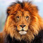 Simbolismo de… el león
