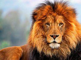 Nueva Acrópolis símbolo león
