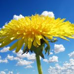 La Primavera, símbolo de renovación