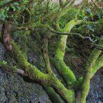 Mitología de los árboles
