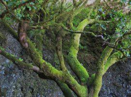 Nueva Acrópolis - Mitología del árbol