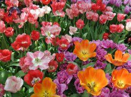 Nueva Acrópolis - Mayo, despertar de las flores