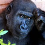 Simbolismo de… el mono
