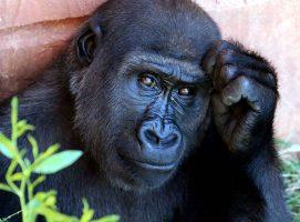 Simbolismo del mono