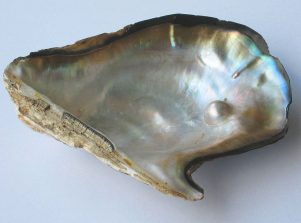 Nueva Acrópolis - Símbolo perla