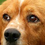 Simbolismo de… el perro