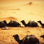 Hacia un nuevo nomadismo