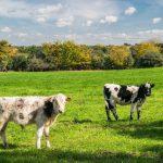 Simbolismo de… la vaca