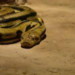 Simbolismo de… la serpiente