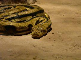 simbolismo de la serpiente