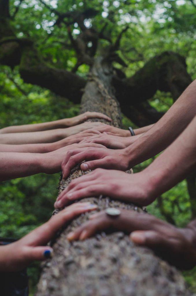 Cooperación humana