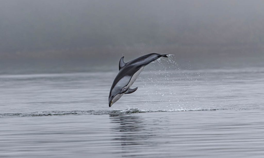 simbolismo delfín